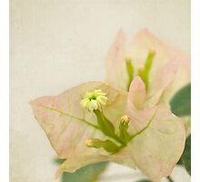 Delicate paper flower Photographic Print