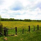 Fields of Gold by kari