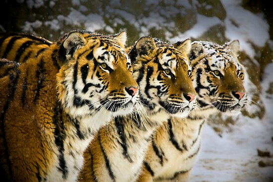 Three Brothers! by Bobby McLeod