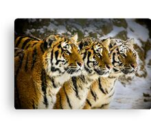 Three Brothers! Canvas Print