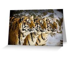 Three Brothers! Greeting Card