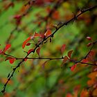 Autumn Berries by Rae Tucker