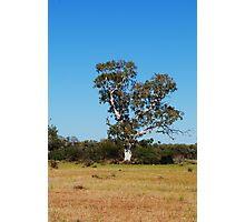 Old man tree Photographic Print