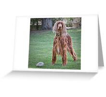 Will You Play Squeaker with Me? Greeting Card