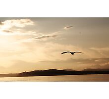 Soaring in Sepia Photographic Print