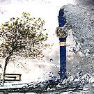 Wet n Wild by Ant Vaughan