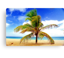 Palm Tree, San Juan, Puerto Rico Canvas Print