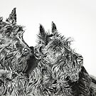Scotty Dogs by Melanie Deroon