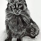 Black Cat by Melanie Deroon
