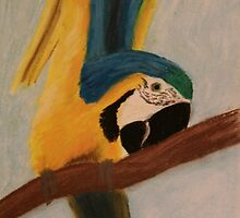 A Blue and Gold Macaw by Rebecca Lee Means
