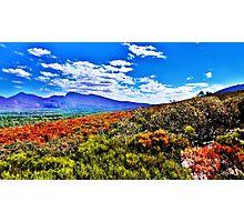 Sea of Shrubs - Wilpenna Pound, SA Photographic Print