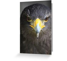 Harris Hawk Greeting Card