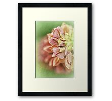 The Gifts Of Nature.... Framed Print