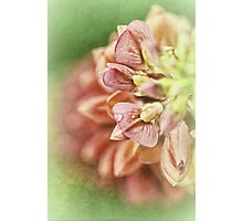 The Gifts Of Nature.... Photographic Print