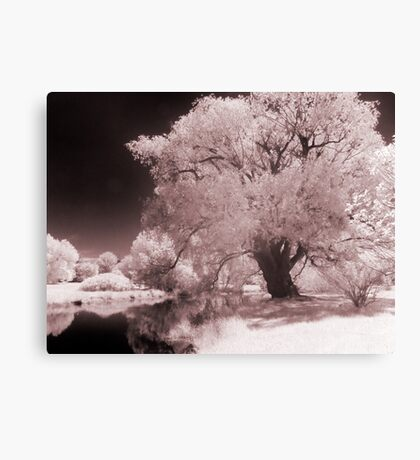 Infra-Red Springtime in Ottawa, No. 3 Canvas Print