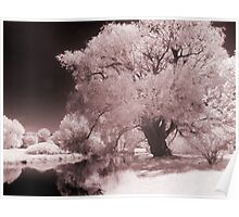 Infra-Red Springtime in Ottawa, No. 3 Poster