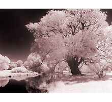 Infra-Red Springtime in Ottawa, No. 3 Photographic Print
