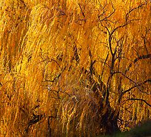 The Willow tree  by Hans Kawitzki