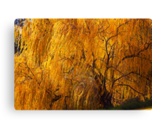 The Willow tree  Canvas Print