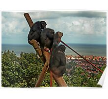 Monkeying around : Which Way is Africa ??? Poster