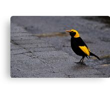 Bright Bird on a Dull Day Canvas Print
