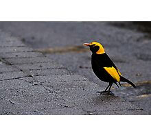Bright Bird on a Dull Day Photographic Print