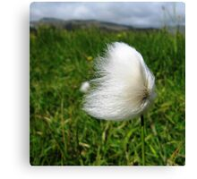 Cotton Grass in the Wind Canvas Print