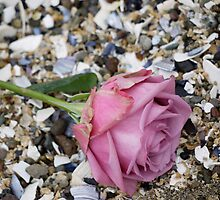 Seashell Rose by Rae Tucker