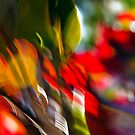 Croton #02 by LouD