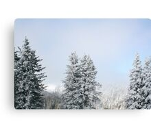 HUNGER OF THE PINE (winter) Canvas Print