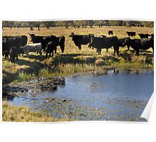 Cattle Mania. Poster
