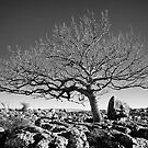 Newbiggin Crags 10 - Lone Tree &amp; Limestone Pavement, Cumbria by Simon Lupton