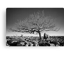 Newbiggin Crags 10 - Lone Tree & Limestone Pavement, Cumbria Canvas Print