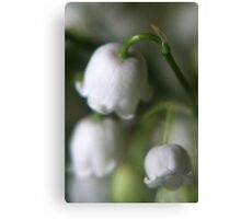 Lily of the valley in macro Canvas Print