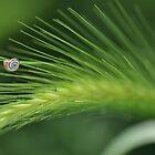 The true beauty of nature by Denitsa Dabizheva