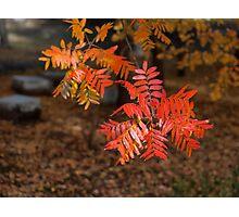 Autumn Garden Photographic Print