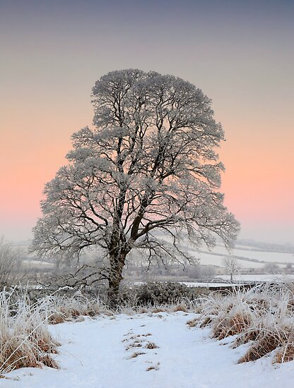 Winter Evening by James Coard