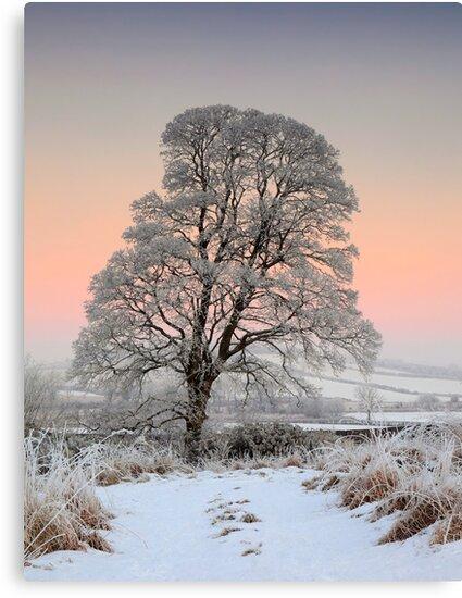 Winter Evening by James Coard
