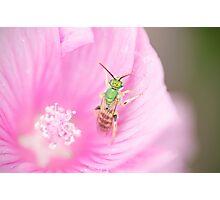 Green Metallic Bee Photographic Print