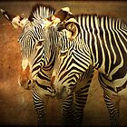 Zebra Couple by caqphotography