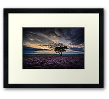 Goathland Lonely Tree  Framed Print