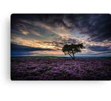 Goathland Lonely Tree  Canvas Print
