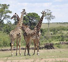 Giraffe's  by NASEEM SULEMAN