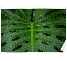 Grean leaf with holes for its design Poster