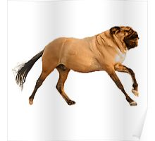 Horse Pug Poster