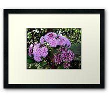 Flower mystery Framed Print