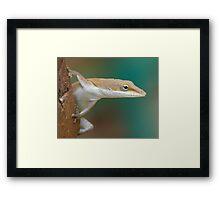 Lizard in the Backyard Framed Print