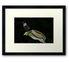 Butterfly on a White Anthurium Flower Framed Print