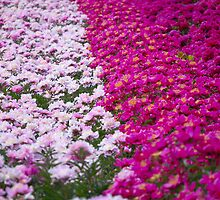 An Ocean Full of Peonies by vbk70