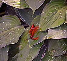 Maple Seeds After the Rain by Lynda Lehmann